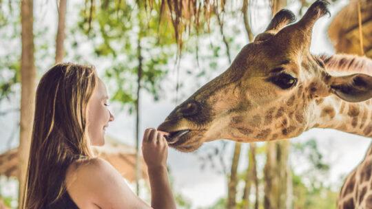 Conseils pour un safari en famille en Afrique